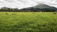 rural-new-zealand-1280
