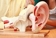 Model ear thumbnail