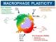 STG Macrophage Plasticity