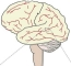 STG Brain