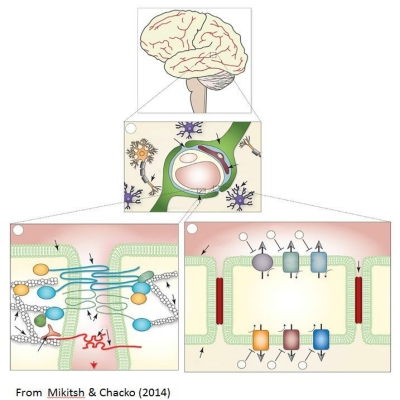 Overcoming the blood brain barrier for the treatment of brain cancers