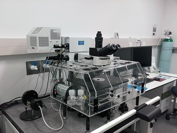 Live Cell Imaging The University Of Auckland